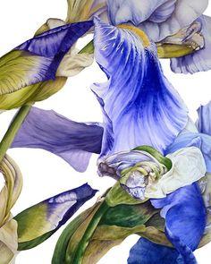 iris. Marie Burke