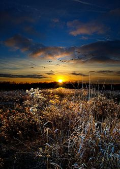 ✯ Within by Phil Koch
