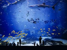 Worlds Largest Aquarium. Atlanta, Georgia.. although im getting anxiety just by looking at the pic, id like to maybe go..