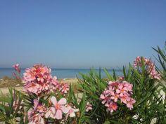 My sea...