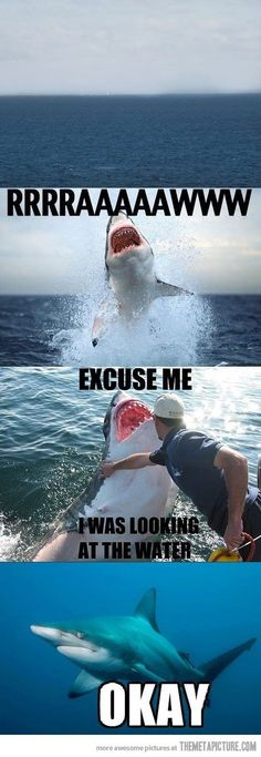 Funny pictures about Excuse me shark. Oh, and cool pics about Excuse me shark. Also, Excuse me shark. Crazy Funny Memes, Really Funny Memes, Stupid Funny Memes, Funny Relatable Memes, Haha Funny, Hilarious, Funny Stuff, Funny Shit, Funny Animal Jokes