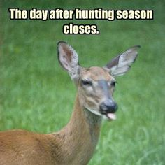 Funny cuz it's sadly true......
