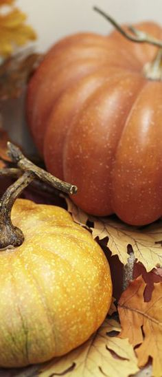 Decorating with Pumpkins | Buyer Select