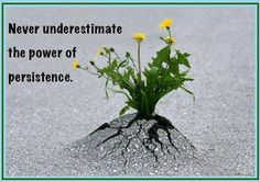 Never underestimate the power of persistence!