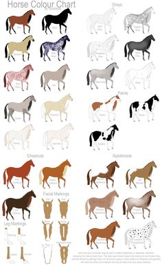Equine Coat Color | Horse Colour Chart by Gaurdianax on deviantART
