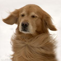 I love the wind blowing through my fur