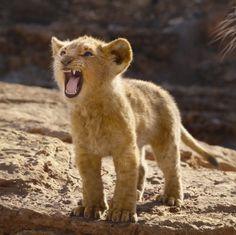 Lion King 2, Lion King Movie, Lion Cub, Disney Lion King, Lion King Animals, Baby Animals, Cute Animals, Le Roi Lion Film, Images Roi Lion