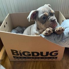 If ever you needed a reason to buy a box besides storage... this is it! 😍🐶 Thanks to @life.of.the.burts for showing us how much Bertie loves our document boxes! #BiGDUG #Storage #Shelving #Box #Boxes #StorageSolutions #Cute #Puppy #Pup #Petstagram #PupsOfInstagram #Pupstagram #InstaPuppy #PuppyLove #Organisation Storage Shelving, Office Storage, Document File, Office Seating, Storage Solutions, Puppy Love, French Bulldog, Boxes, Thankful