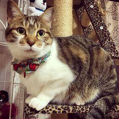 . 🎍明けましておめでとうございます🎍 . 🐾~今年も宜しくにゃ~🐾 .  #3にゃんズ  #猫好き  #愛猫  #ねこ #みんねこ #猫  #cat #にゃんこ  #instacat  #ベンガル猫  #茶とら #アメショーmix  #ヒョウ柄 #ベンガル  #レオパード #bengal  #bengalcat #にゃんすたぐらむ #Instagramcat #ナデシル