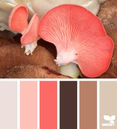 mushroom hues #zeisset #weisweil repinnt by www.zeisset.de