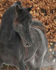 "6,161 Likes, 33 Comments - Dreamy Ponies (@dreamyponies) on Instagram: ""With 20% of the vote, Dreamers your favourite of horse colour is classic black - by a long shot! …"""
