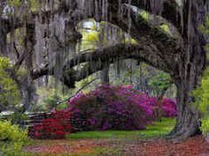 Oaks and Azelias by Mark Hilliard  WOW!!