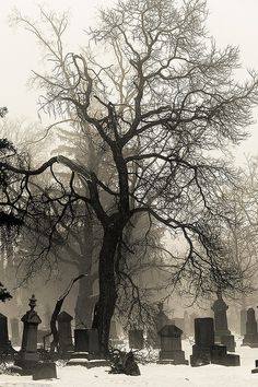 Foggy graveyard in winter Gothic Angel, Gothic Art, Graveyard Tattoo, Old Cemeteries, Graveyards, Spooky Places, Gothic Aesthetic, Cemetery Art, Dark Tattoo
