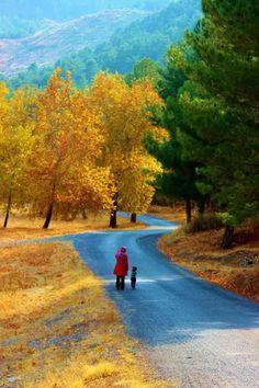 Yedigöller milli parkı (7 Lakes national park) - Bolu TURKEY.