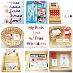 My Body Unit w/ Free Printables (Learn & Play Link Up) - Kindergarten Montessori Science, Montessori Homeschool, Montessori Classroom, Kindergarten Science, Homeschooling, Classroom Ideas, Human Body Activities, Preschool Activities, Preschool Printables