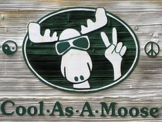 Cool As A Moose, Bar Harbor, ME - adorable little shop right in downtown with lots of souvenir options.love this store. Portland Bars, Bar Harbor Me, Moose Pictures, Moose Decor, Mount Desert Island, Acadia National Park, Cruise Port, Great Memories, New Hampshire