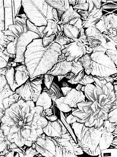 Coloring Pages for Adults Only | The Helpful Art Teacher: A garden of flowers, blending colors using ...