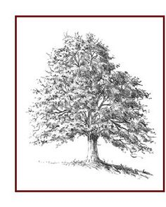 How to Draw Trees Quickly and Easily