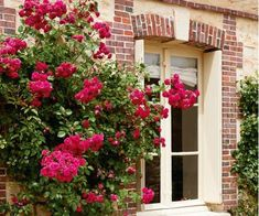 Landscape Photos, Landscape Design, Garden Design, House Design, Exterior Tradicional, Traditional Exterior, Spray Roses, Climbing Roses, Rose Cottage