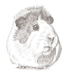 Hey, I found this really awesome Etsy listing at https://www.etsy.com/uk/listing/292333461/guinea-pig-cute-realistic-pencil
