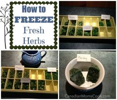 How to Freeze Fresh Herbs to add to your winter #soups and #sauces via @Canadian Moms