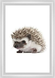 Baby Hedgehog Framed Print, White, Classic, None, None, Single piece, 20 x 30 inches