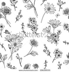 Beautiful vintage seamless pattern with blue flowers on a white background. Garden asters, chrysanthemums, daisies. Vector illustration. Black and white. - stock vector
