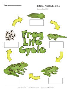 This week my students will be reading a Frog and Toad story by Arnold Lobel. These characters are well loved by young readers and the story Days with Frog and Toad provide a great opportunity to practice the skills of compare and contrast. I like to use this story as a launching opportunity to read and write about factual information about frogs and toads. I continue the skill of comparing and contrasting by having students analyze a table of data that I created about frogs and toads.