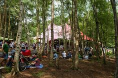 Photo: Latitude Festival 2014 | Sunday | Latitude Festival