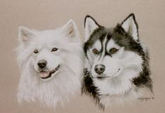siberian samoyed with siberian husky pup | samoyed pictures paintings and portraits plus dog breed information