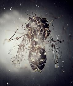 Decay for EvokeOne XXX exhibition: Flow by Csaba Fekete, via Behance