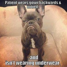 Patient wears gown backwards & untied...and isn't wearing underwear.