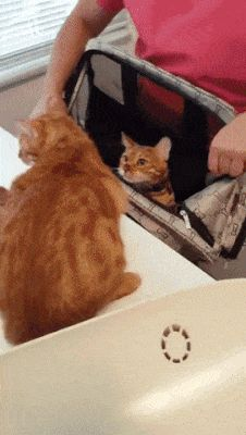 Im Taking You with Me. Cats don't seem all that invested in the concept of consent. Don't be like this cat. #FunnyCatGifs