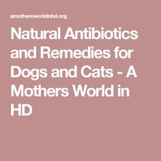 Natural Antibiotics and Remedies for Dogs and Cats - A Mothers World in HD