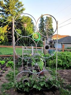Bike wheels and chains repurposed into a garden trellis.