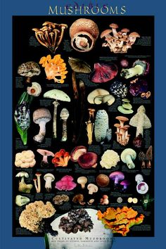 Poisonous and Psychotropic Mushrooms Poster Psychedelic Mushrooms ...