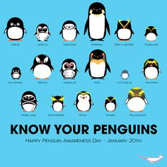 It was Penguin Awareness Day on January 20th apparently. I LOVE this infographic, it's so cute!!! ^_^ I need this in a poster form.