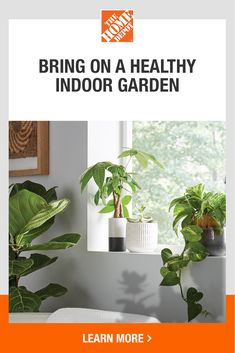 Now is the time to revisit and refresh your indoor garden. The Home Depot offers the support you need to maintain healthy and happy plants and succulents. Explore how-to guides, helpful tips and virtual workshops. Find the tools and resources you need to garden with confidence. Tap to get started with The Home Depot today. Plants Indoor, Indoor Gardening, Gardening Tips, Garden Club, Lawn And Garden, Home And Garden, Oxygen Plant, Happy Birthday Wishes Cake, Easy Pork Chop Recipes