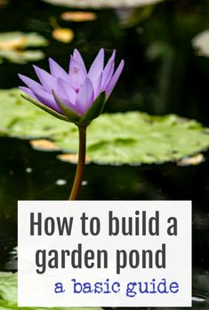 Building A Pond For Your Garden – Essential Tips to help you build a pond - a basic guide to a great garden DIY project   #garden #DIY #abeautifulspace #pond Beautiful Space, Beautiful Gardens, Beautiful Homes, Diy Garden Projects, Easy Projects, Building A Pond, Growing Veggies, Garden Pond, Plant Needs