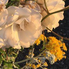 Imagem de flowers, yellow, and aesthetic Flower Aesthetic, Aesthetic Photo, Aesthetic Pictures, Aesthetic Yellow, Aesthetic Art, Fotografia Vsco, Plants Are Friends, Bloom, No Rain