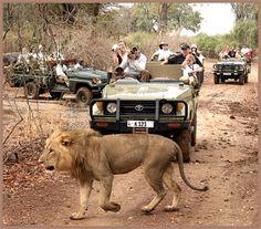 safari: taking pictures