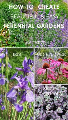 Follow these professional tips to learn how to create a beautiful perennial garden. As an example, repeat plants, colors, heights, and forms.