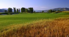 3 Creek Ranch Native Grasses Look Nice, but You Don't Want to Try and Hit Your Ball Out of There | 3 Creek Ranch Golf Club