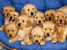 Soooo many cuties!