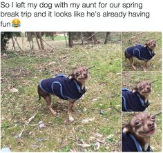 Like getting to spend time outside. | 19 Dogs So Happy They'll Make You Happy Too