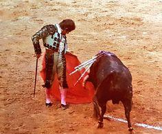 Rafael de Paula Camel, Spain, Horses, Nature, Picasso, Animals, Revenge, Flamingo, Animales