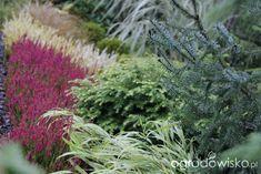 Ogród z lustrem - strona 324 - Forum ogrodnicze - Ogrodowisko Herbs, Herb, Medicinal Plants