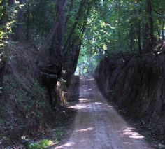 Old Stagecoach Road in Marshall, Texas.  Use to have so much fun on this old dirt road growing up.