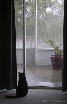 5-22-09: When the Rain Comes | Irony looks out at the rain. … | Flickr