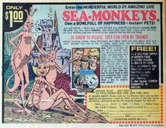 I believed in Sea Monkeys. I believed in them more than I believed in Santa or the Easter Bunny.